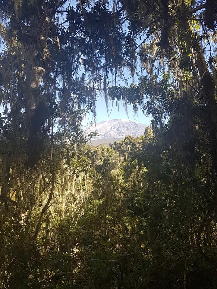 Last view of Kili