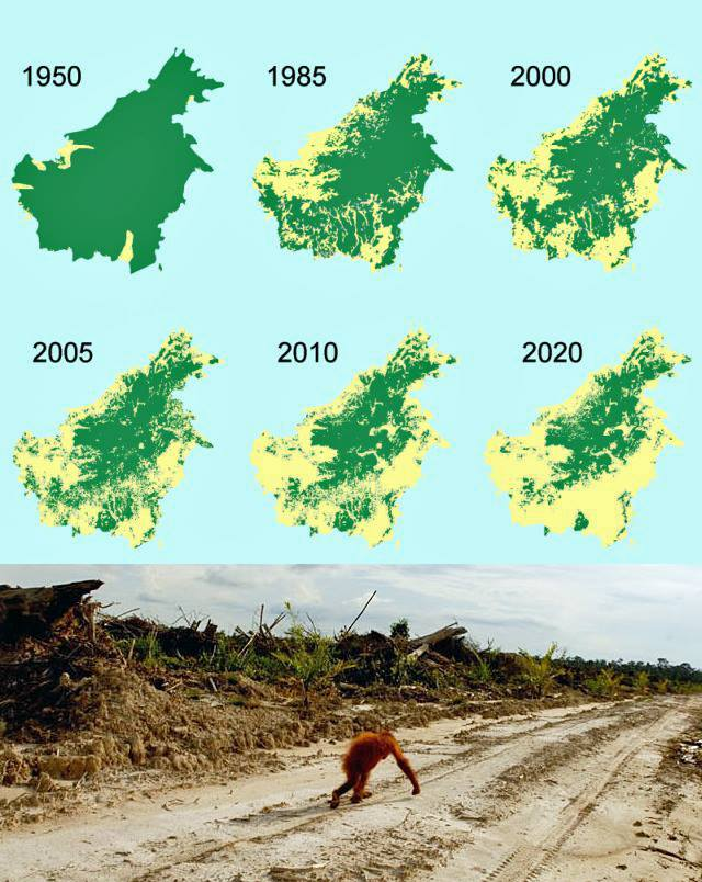 Maps showing forest loss in Borneo