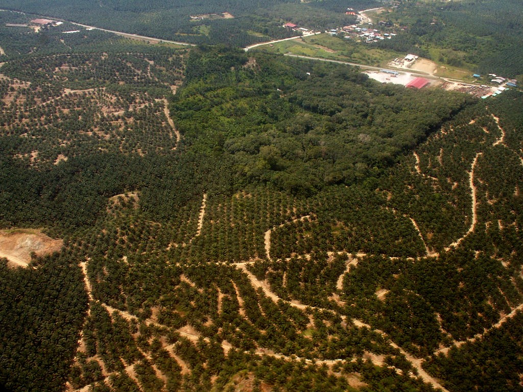 Palm oil plantations as far as the eye can see in Borneo, Indonesia