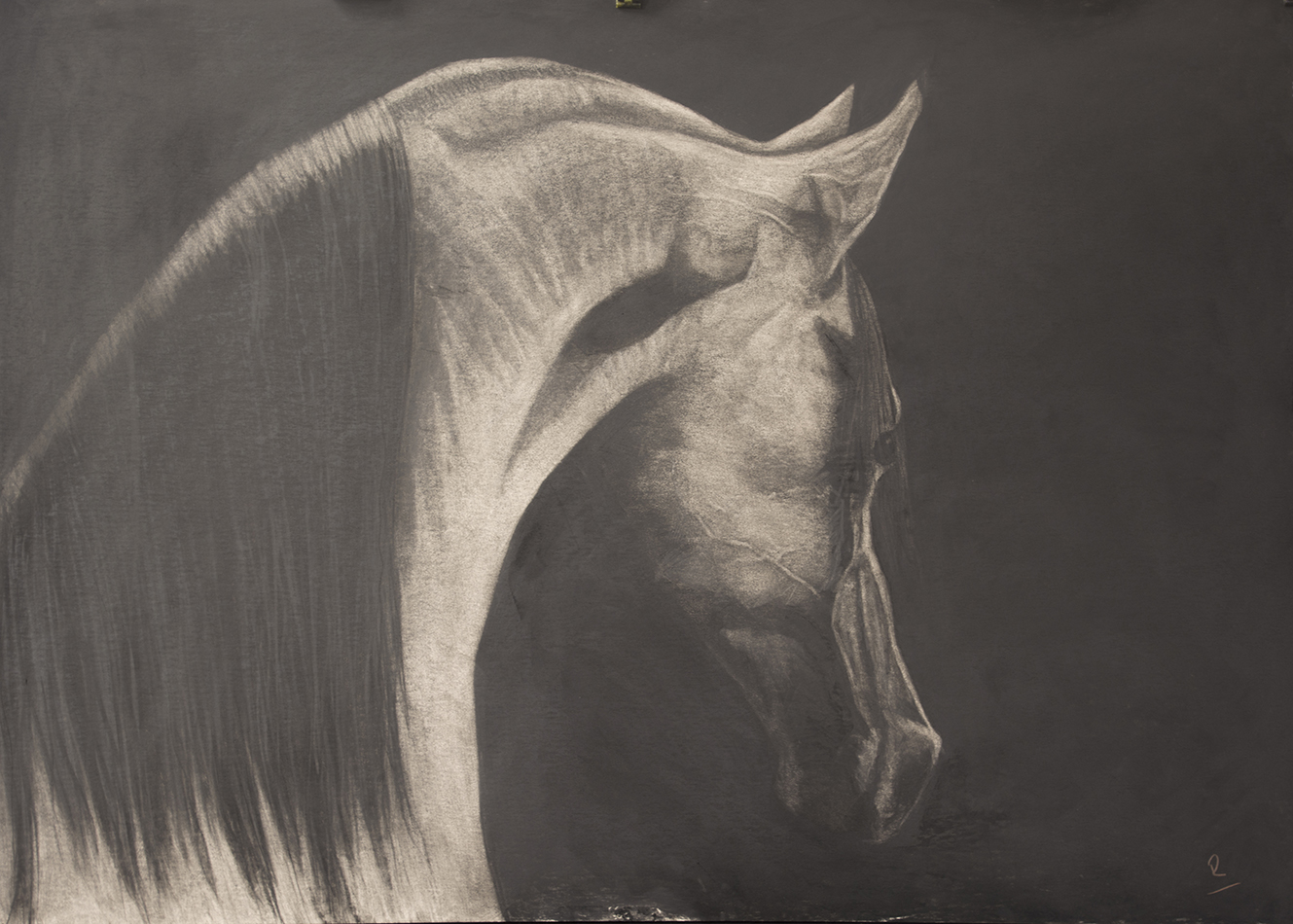 '' The Stallion '' Charcoal on board 44 x 32 ins