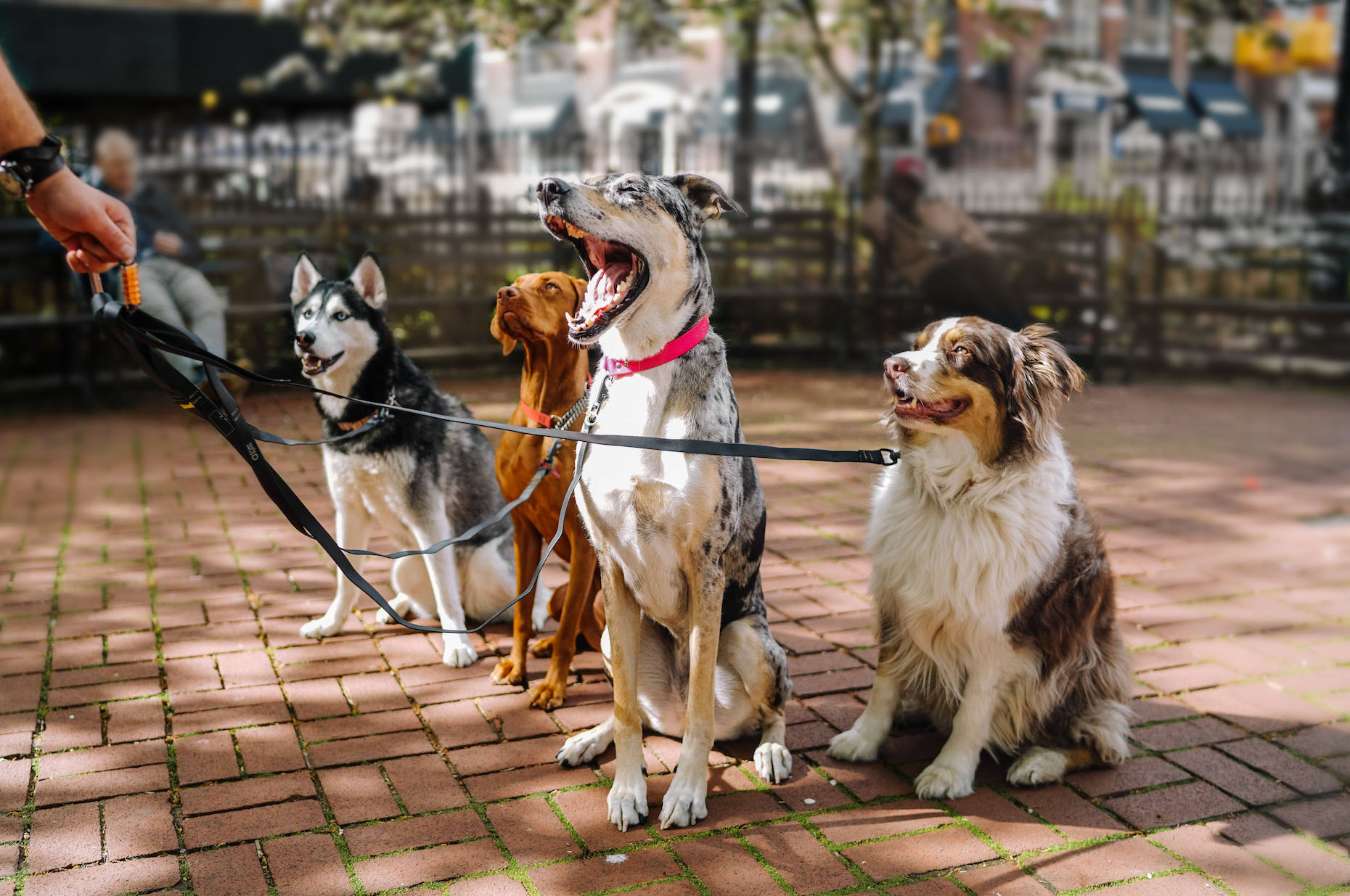 Join the PACK - Ready to take a walk?