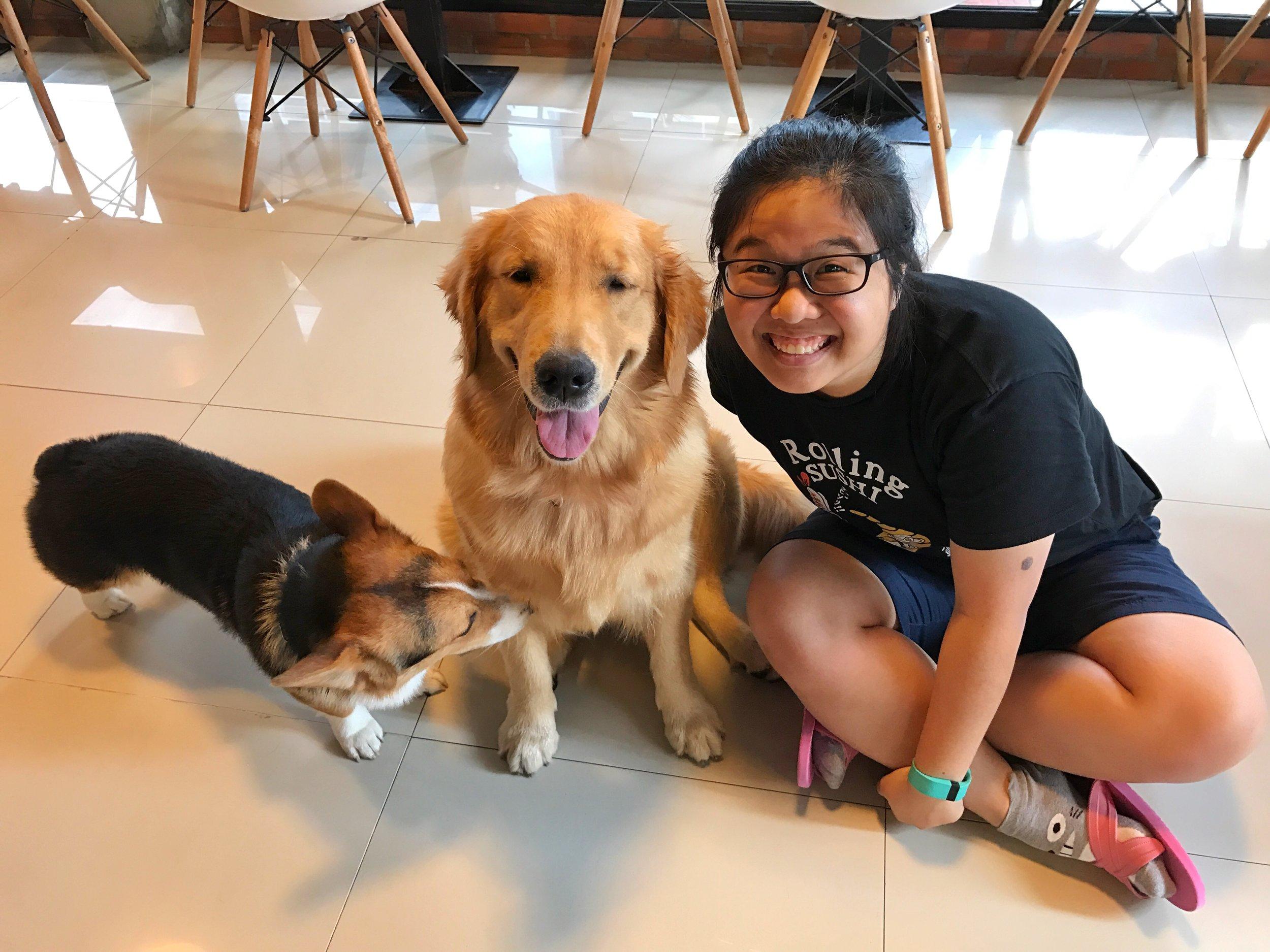 House of Paws (HOPs) Dog Cafe golden retriever