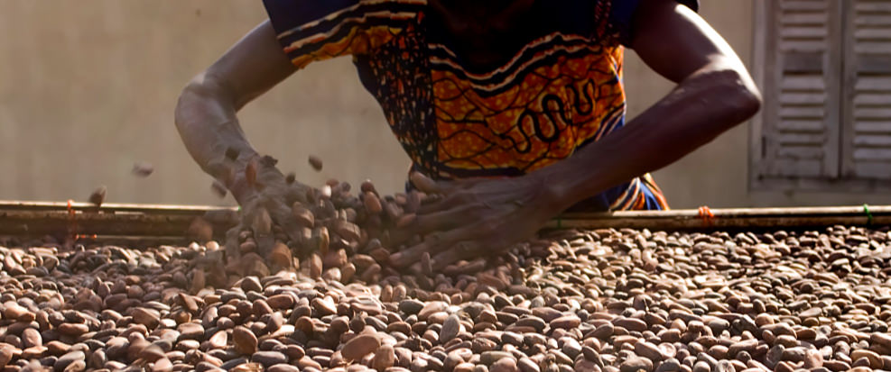 Cocoa Farmers in Côte d'Ivoire and Social Capital in Technology Adoption -
