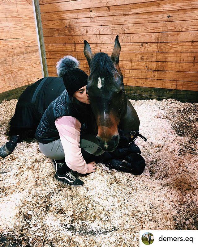 A little late night snuggles🦄💜 📸: @demers.eq ~ #koniaequestrian #mykonia #prettypony #equestrianstyle #equestrianfashion
