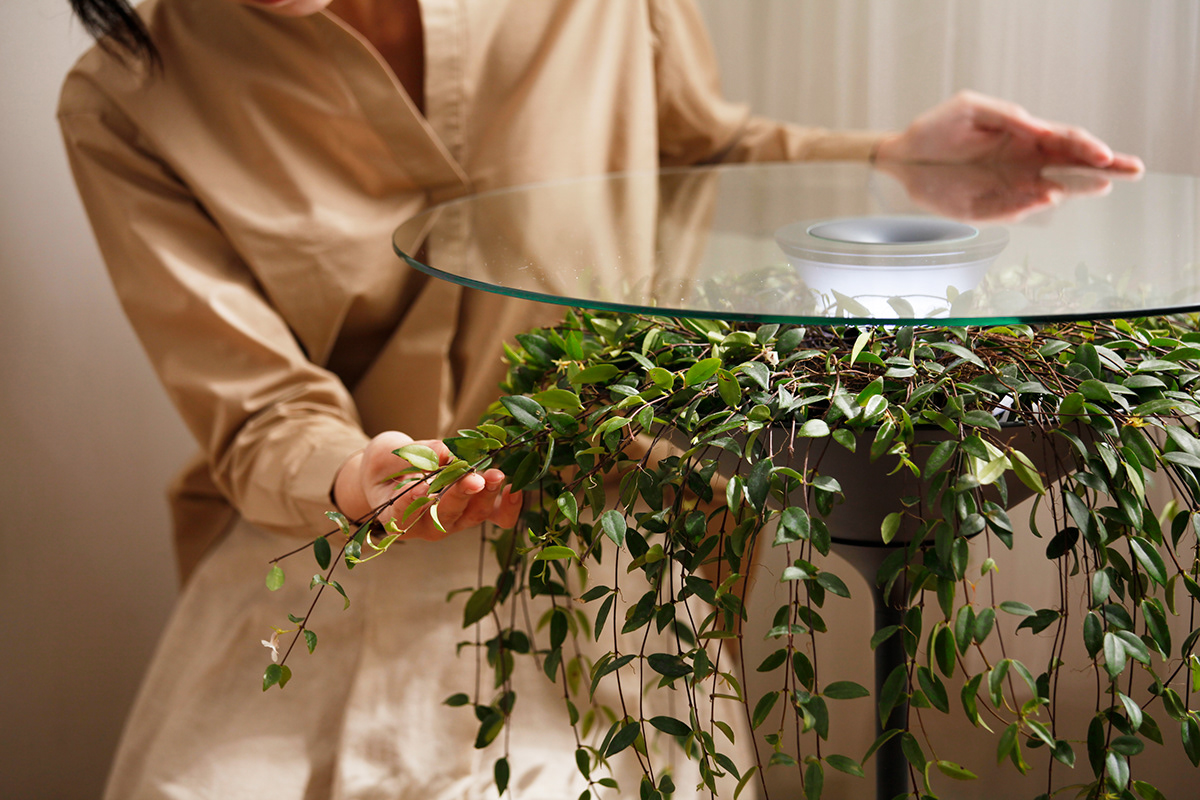 "The plants in the table are naturally drooping like a beautiful tablecloth, lying there quietly to accompany with you, and allowing ""natural"" could ""naturally"" integration into the atmosphere of the home."
