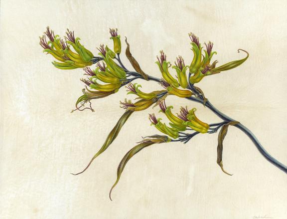 Phormium tenax , New Zealand Flax, watercolor on vellum over panel, ©Carol Woodin