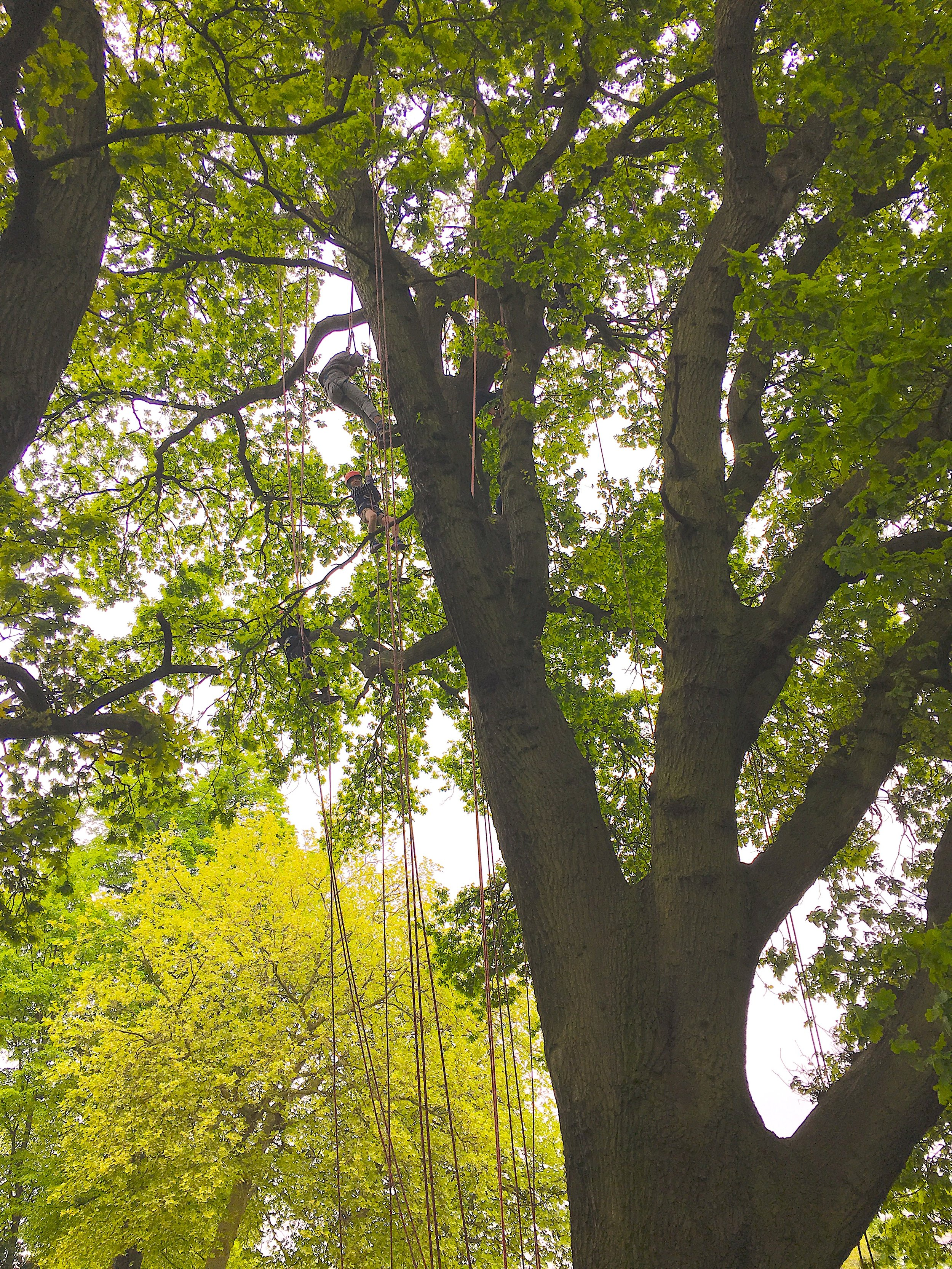 Big Tree Climb rig.JPG