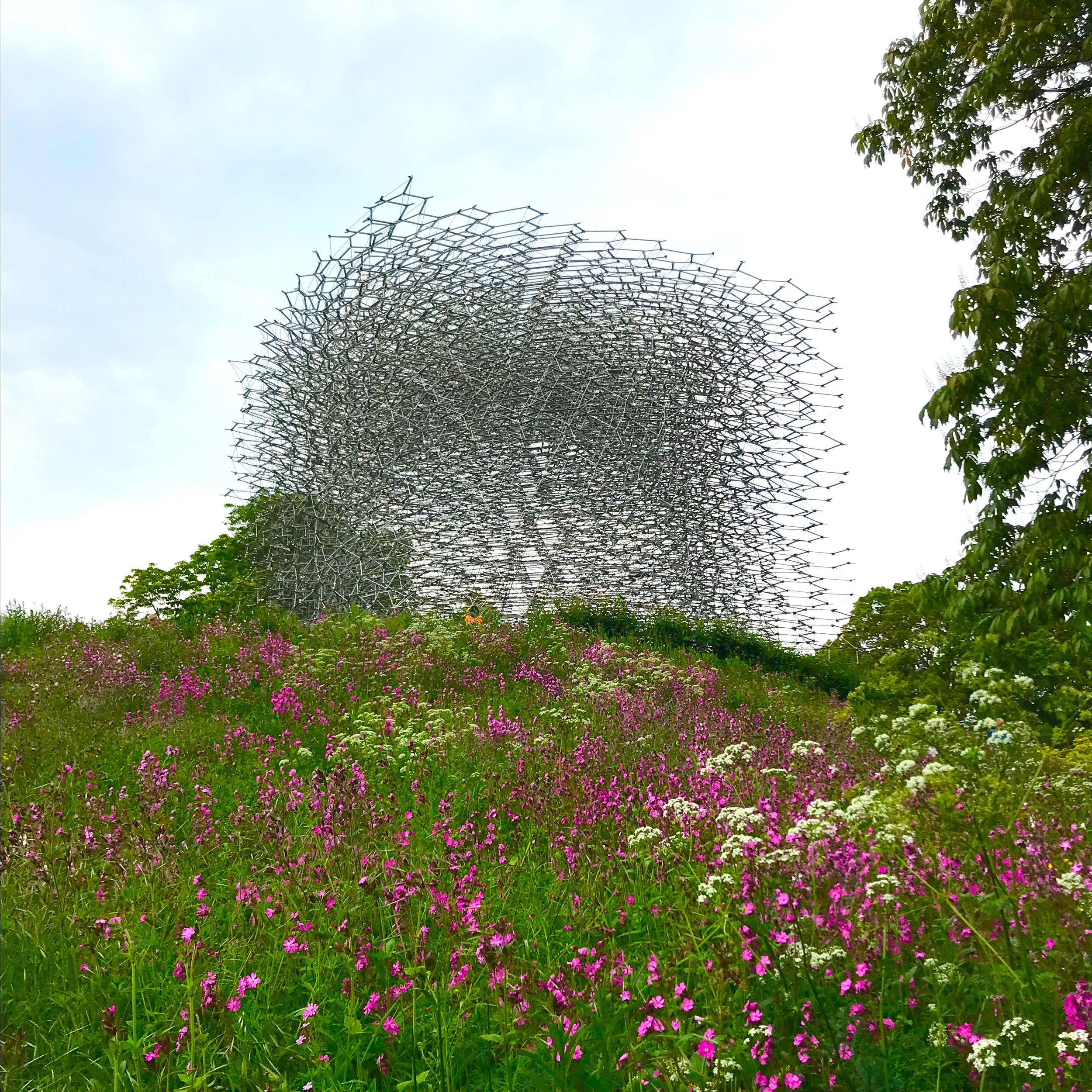 My favourite Kew attraction - the astonishing Hive. A sense of life inside a beehive is conveyed using light and sound.