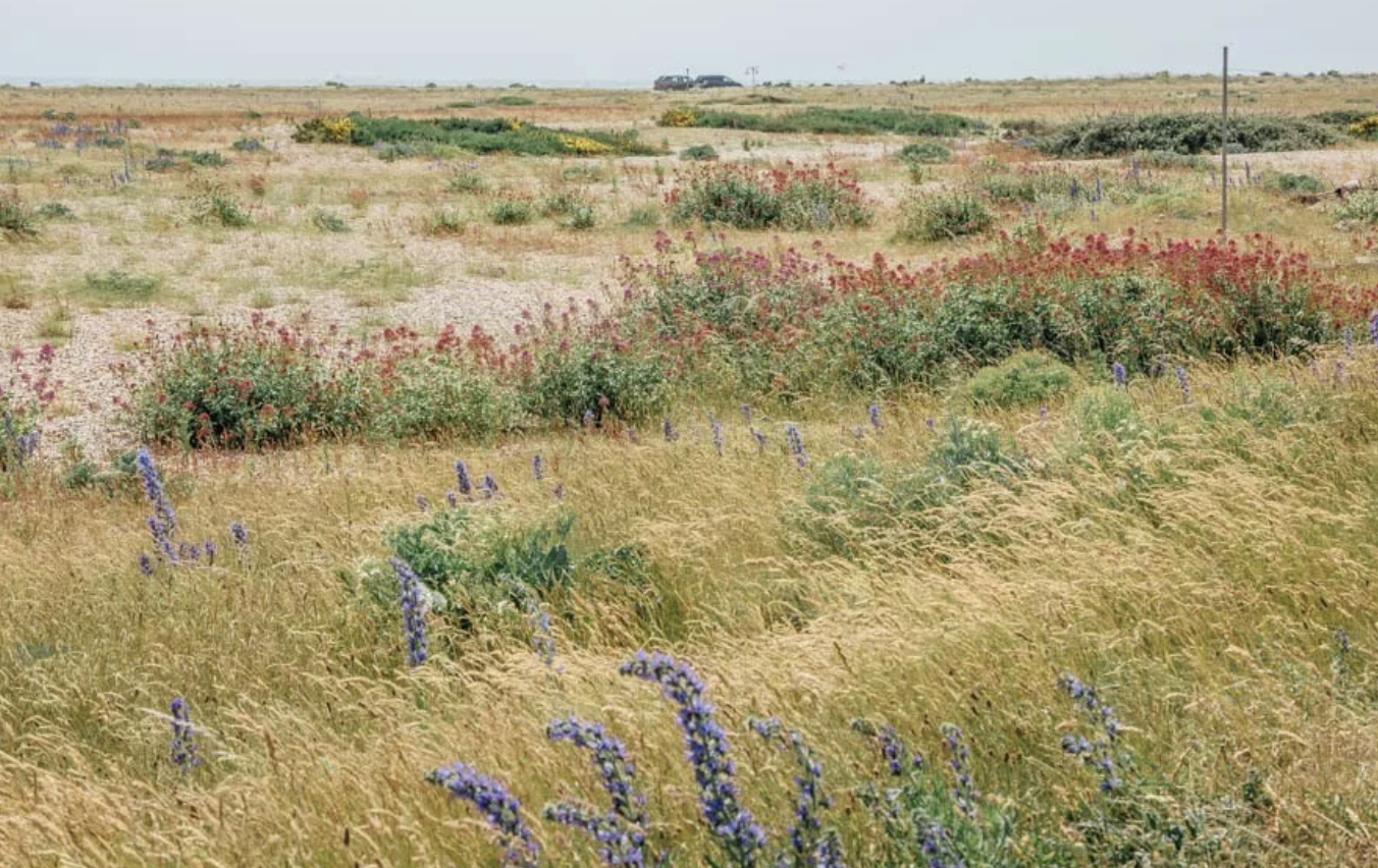 A third of all the plants in the UK can be found at Dungeness