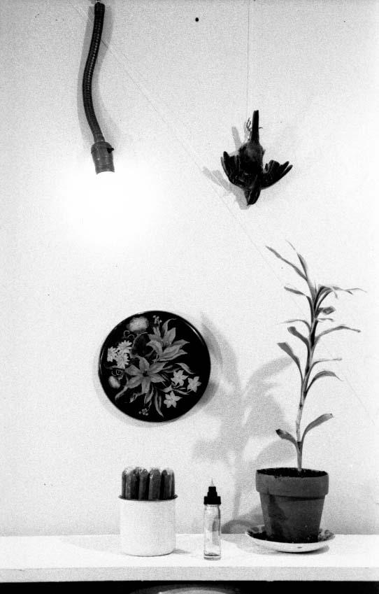Petit oiseau, 1974
