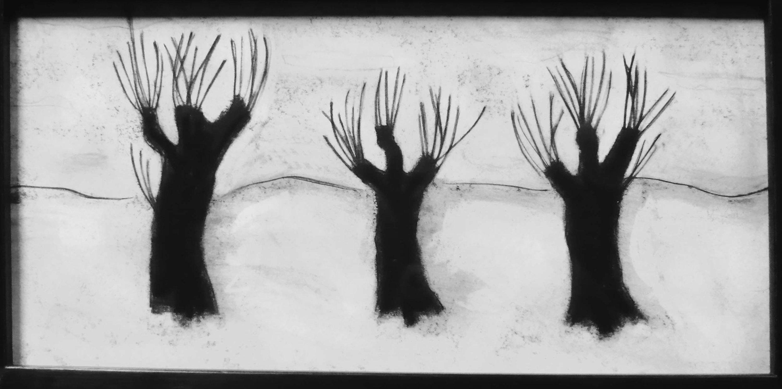 Trois troncs d'arbre ,circa 2008, fusain sur papier / Charcoal on paper