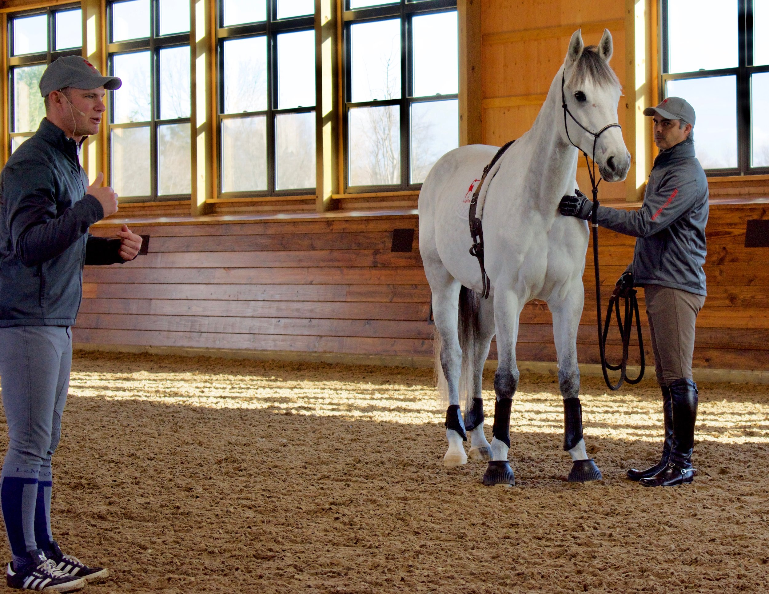 "Disco, a grey gelding who recently came from Germany, is very sensitive to the point where he becomes so concerned about making a mistake it almost paralyses him. ""Going to horse shows was a huge struggle for him,"" said Alexa, Rodrigo's wife."