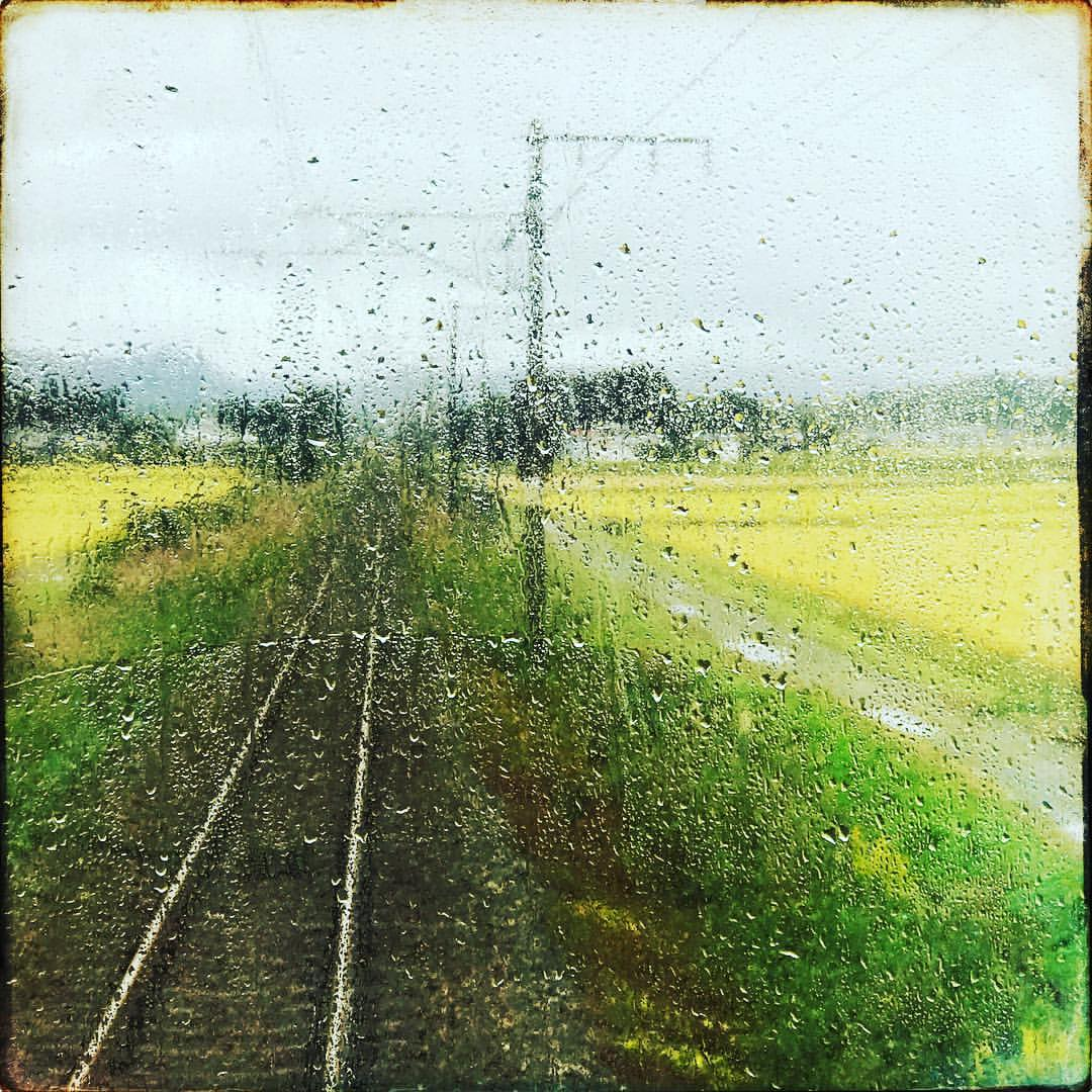 October 7, 2017  And just to take a breath for a moment it's great to ride this train between  #Odaka  and  #Natori . For the first time since 3/11 the railway is functioning. I love these small rural trains and I've wanted to ride this line for years. On a single track the small 2 car train passes by so much history here: small shrines in the forests that hug the tracks, rice fields bright yellow before harvest, mountains and streams the surround and pass underneath the tracks Forming interior arteries and heart of #Fukushima  and  #Miyagi -and now a vital link between friends, making people feel closer and a beautiful little part of this region that has endured so much right again. — in  Soma-shi, Fukushima, Japan .