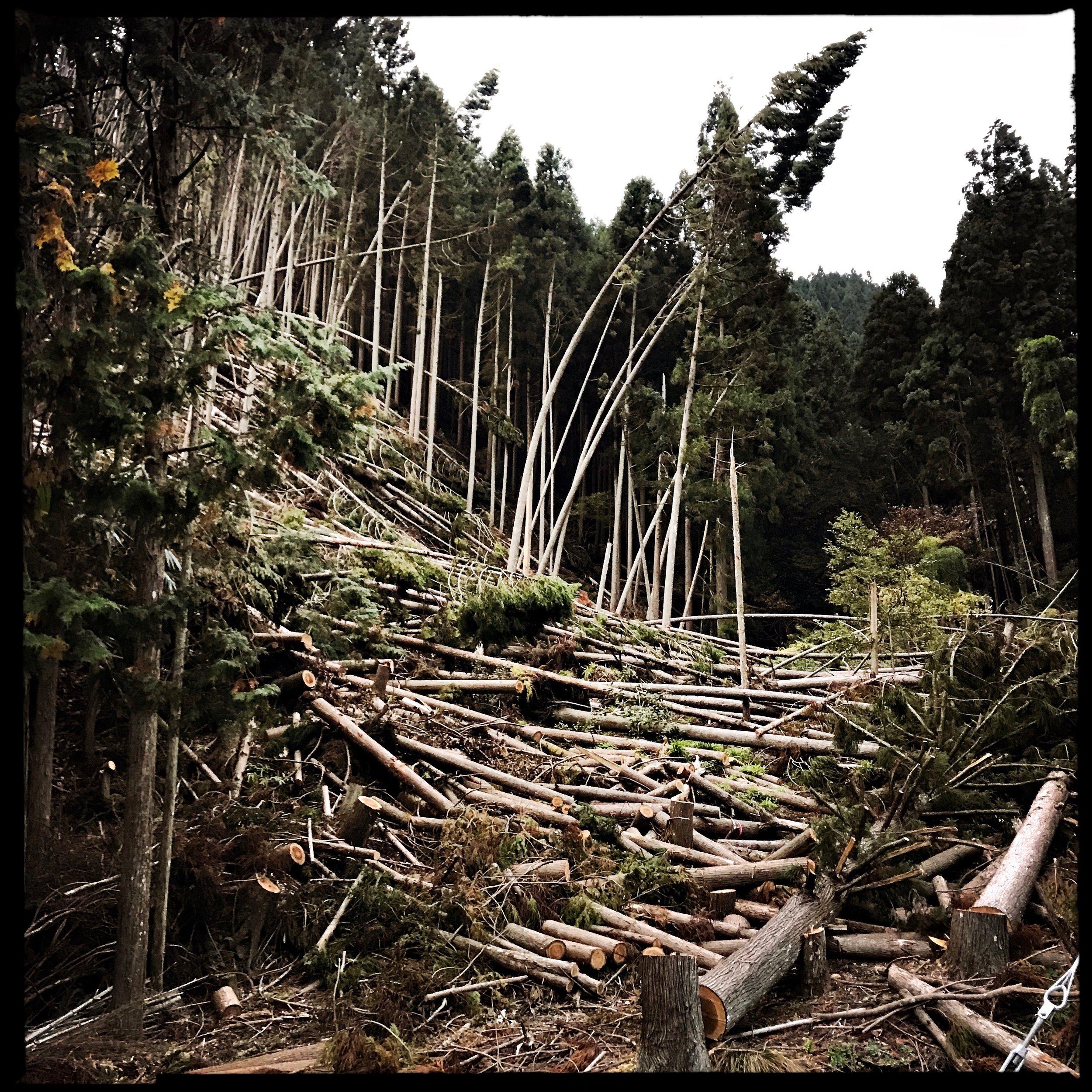 An avalanche of destruction following typhoon 25.
