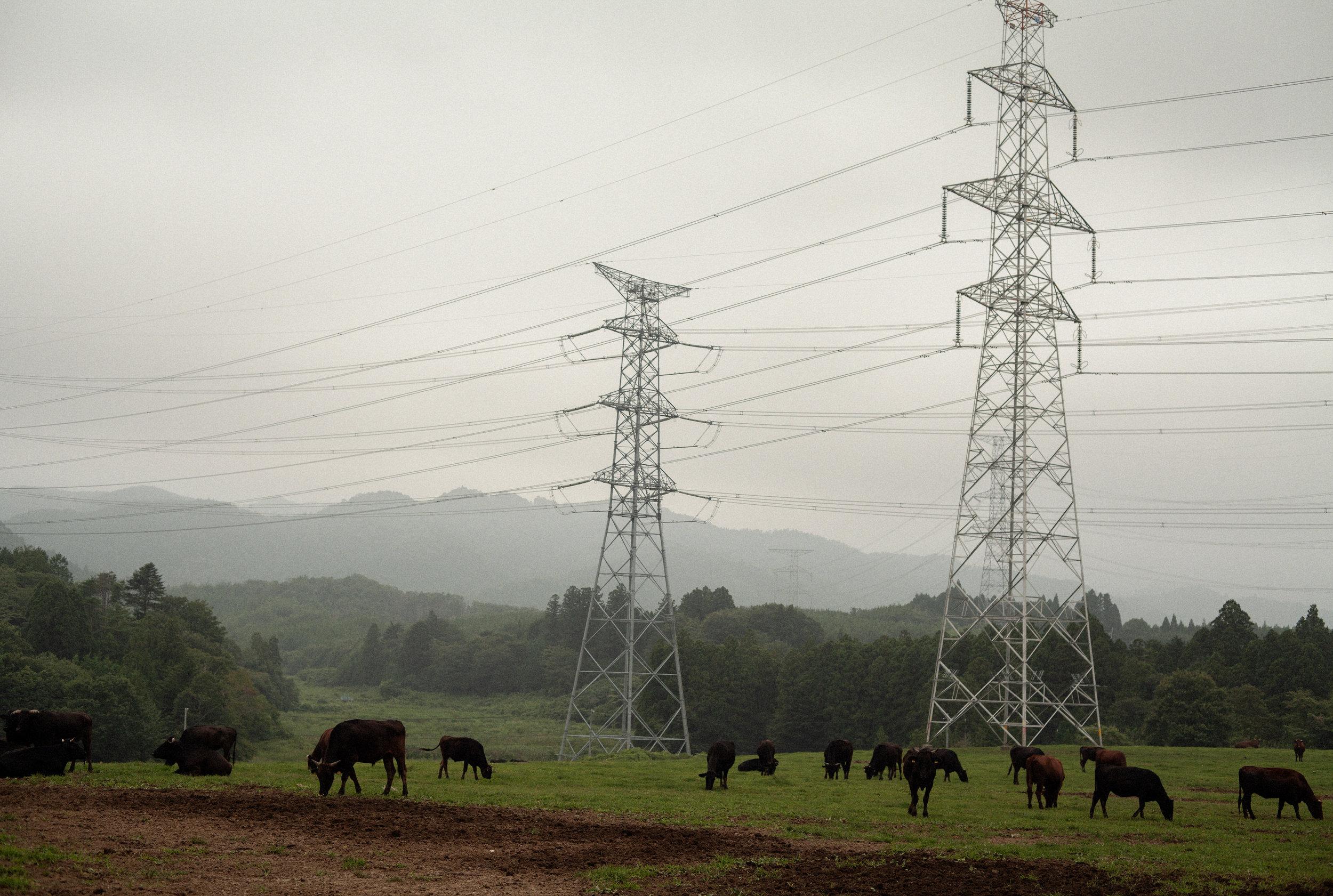 原発に 汚染されたる 草を食む 人なき野辺に 放たれし牛grazing on grasscontaminated by falloutin an empty fieldcowsleft behind to roam - 植原 昭士 (群馬県 2011年5月)Shoji Uehara, Gunma May 2011