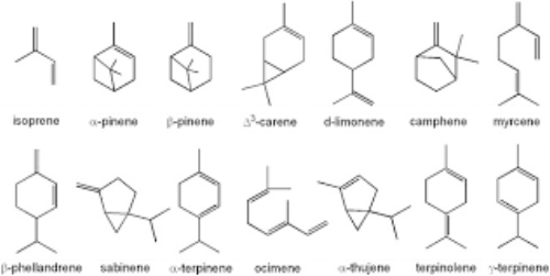 Examples of common monoterpenes found in essential oils.