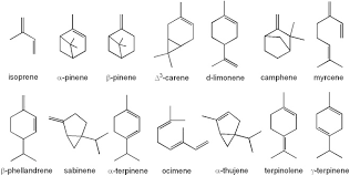 monoterpenes.png
