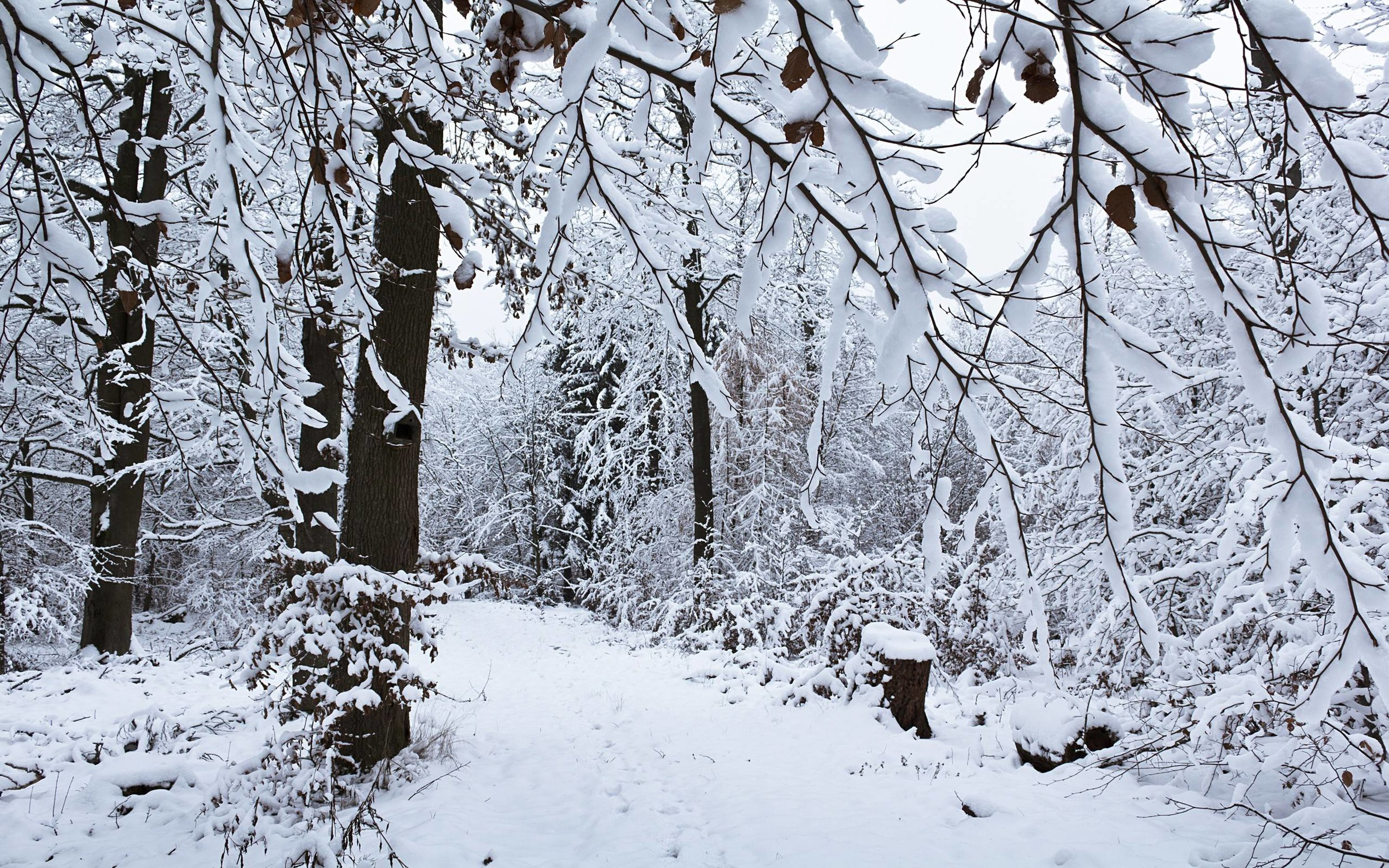 cold forest pic.jpg