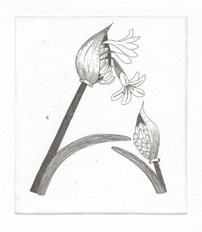 Fynbos A - Z  (Agapanthus) (2012)