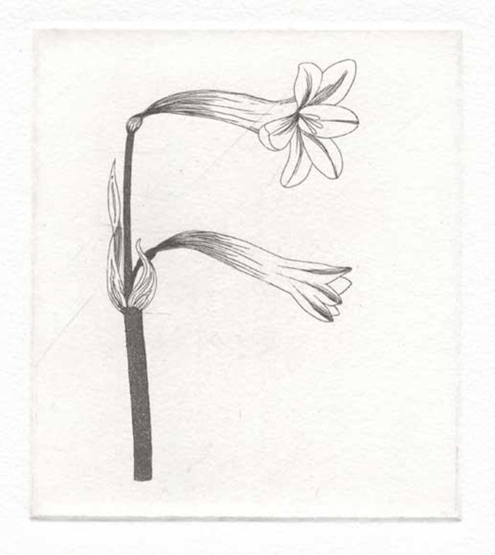 Fynbos A - Z  (Fire lily) (2012)