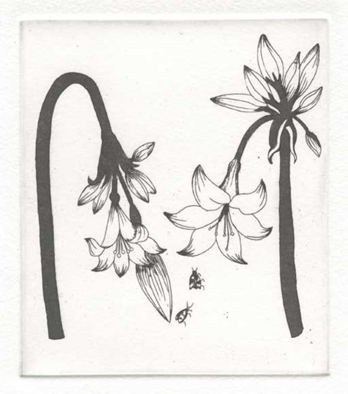 Fynbos A - Z  (March lily) (2012)