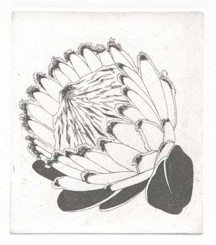 Fynbos A - Z  (Queen protea (Protea magnifica)) (2012)