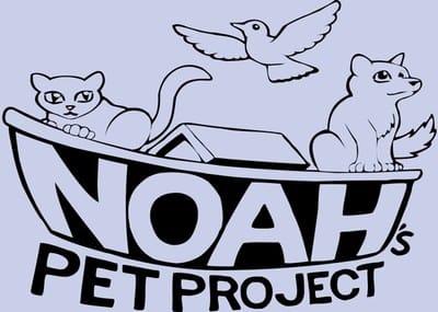 noah 1.jpg
