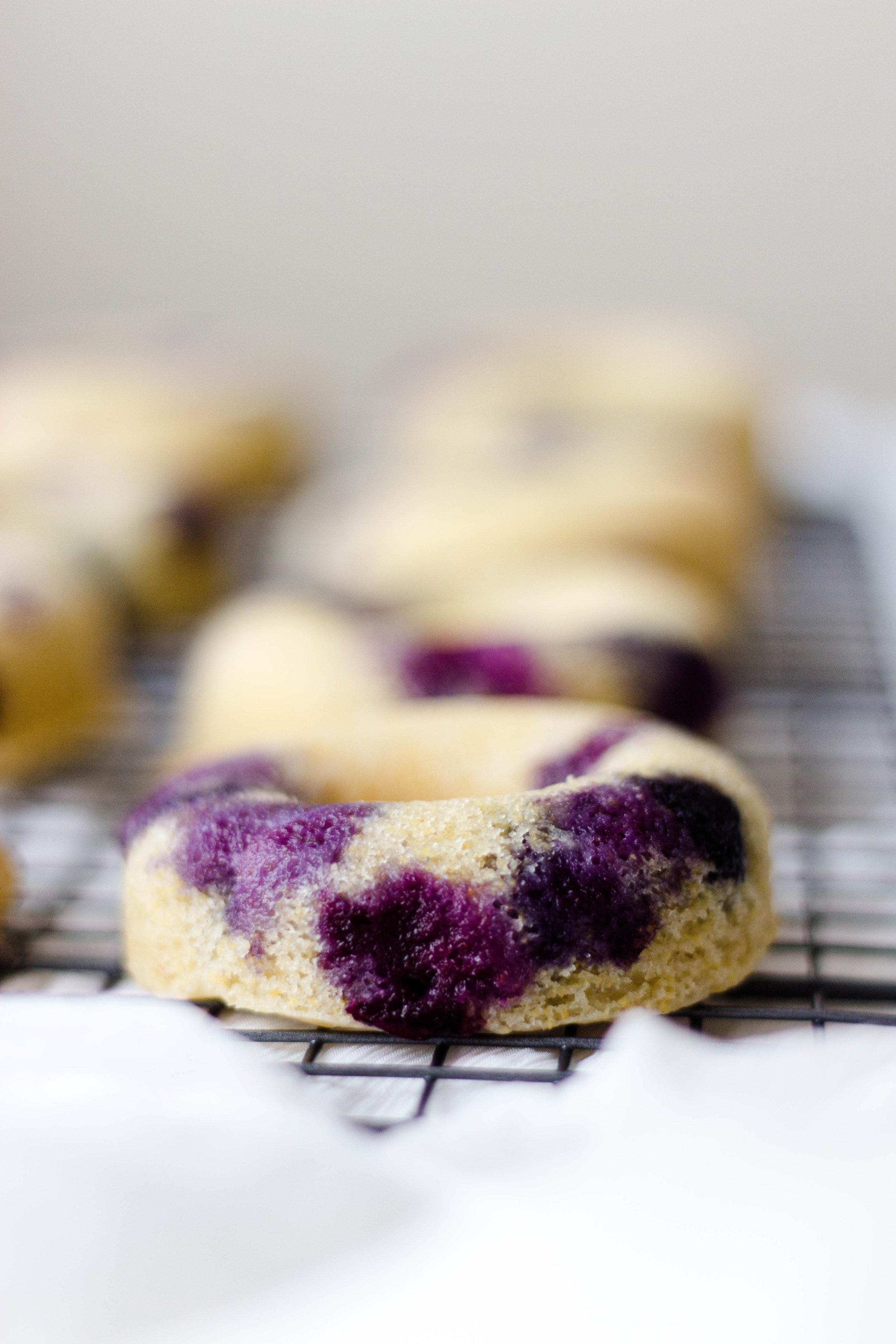 baked blueberry lemon cornmeal donuts-10.jpg