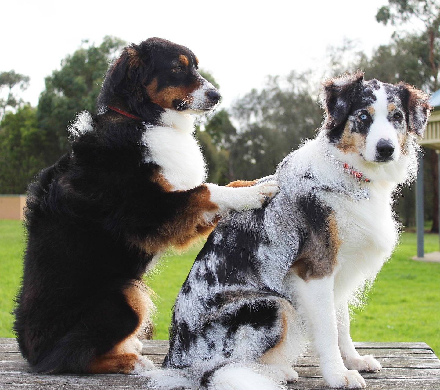 Massage Classes - Learn how to give the benefits of massage to your significant other of beloved canine companion.