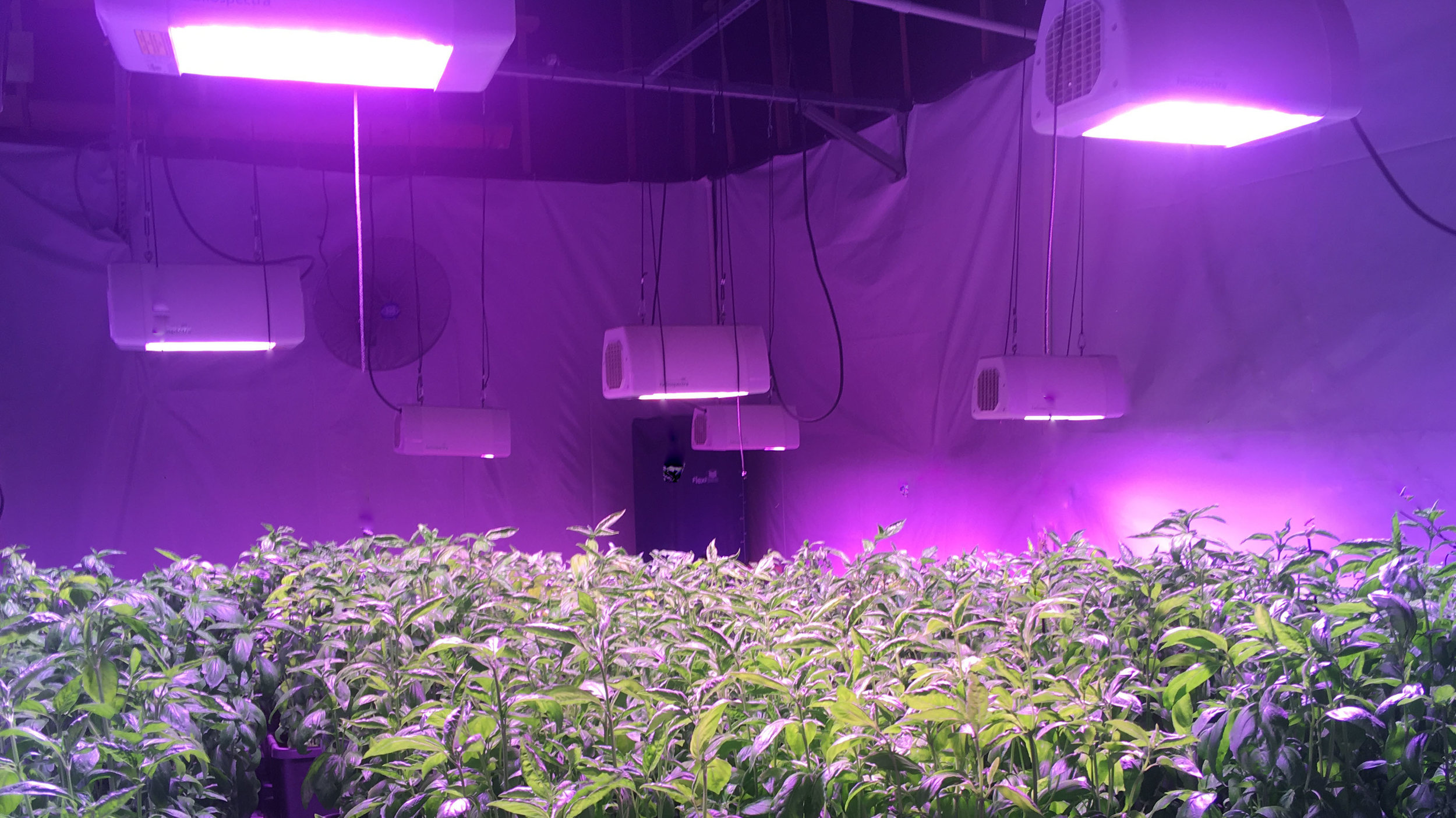 Light Strategies - •    Increase Production•    Shorten Grow Cycles•    Lower Production Costs