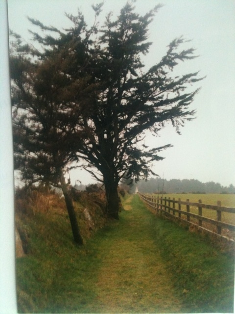 A view from Jean Kennedy Smith Walk..JPG