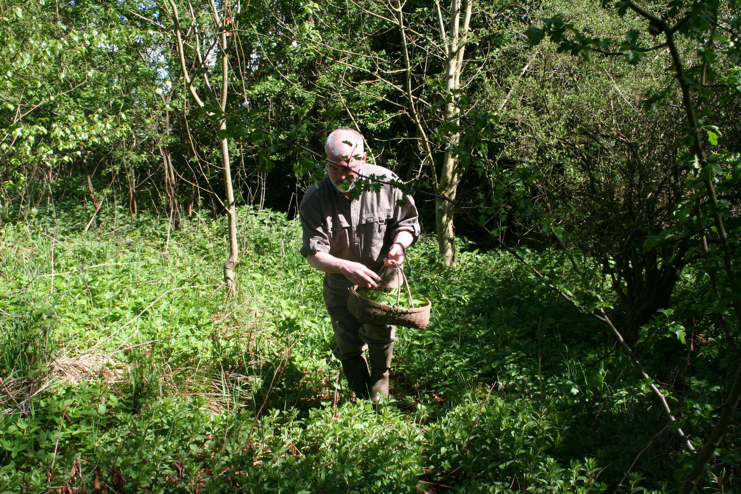 Our Founder Foraging for Botanicals