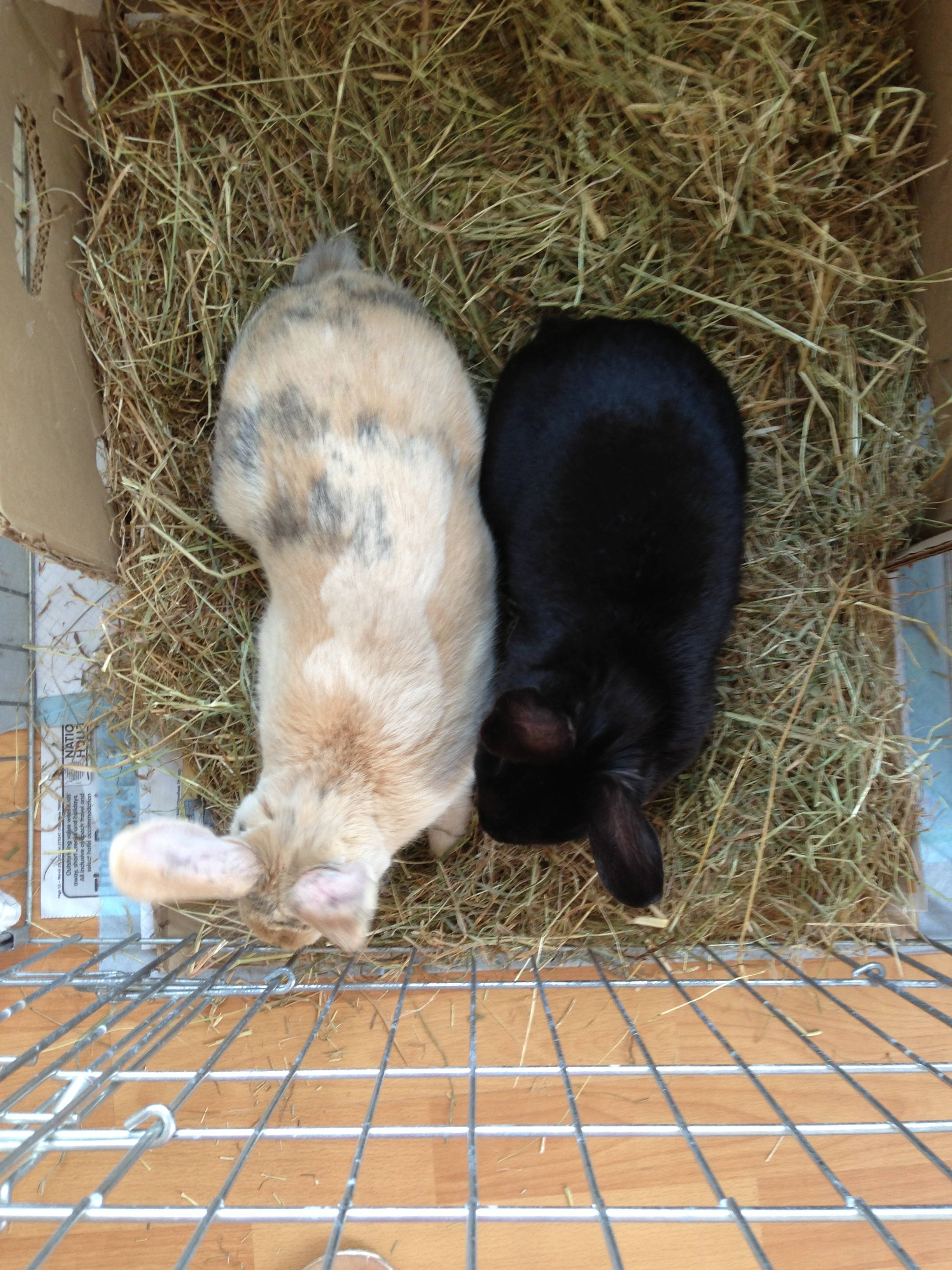 Huey & Harriet during the early stage of bonding.