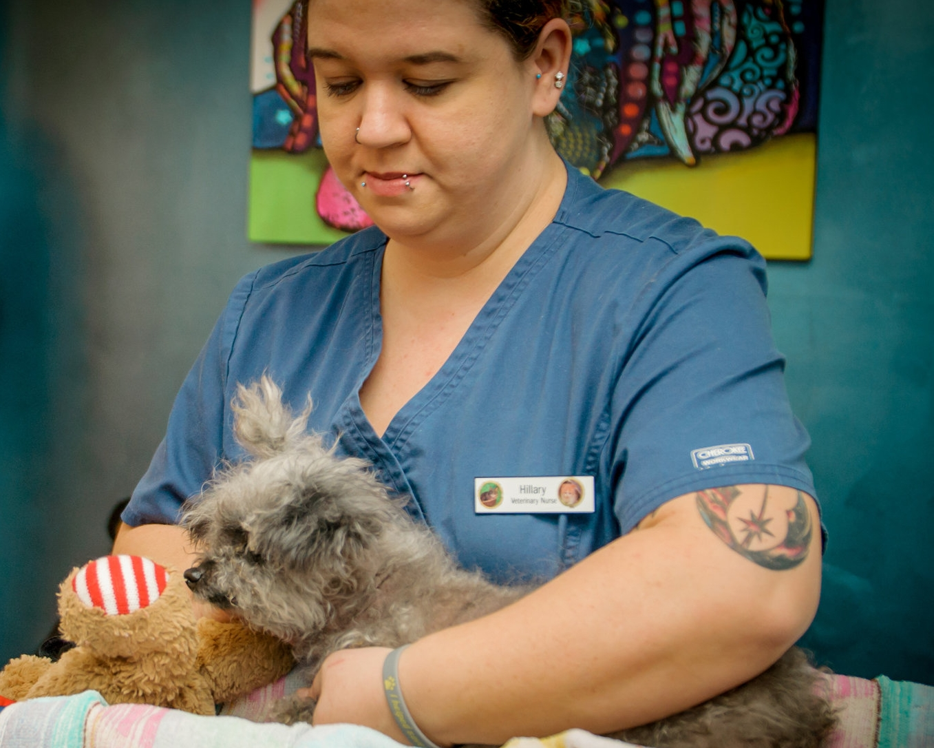 Medical Care for Aging Pets | Bees Ferry Vet