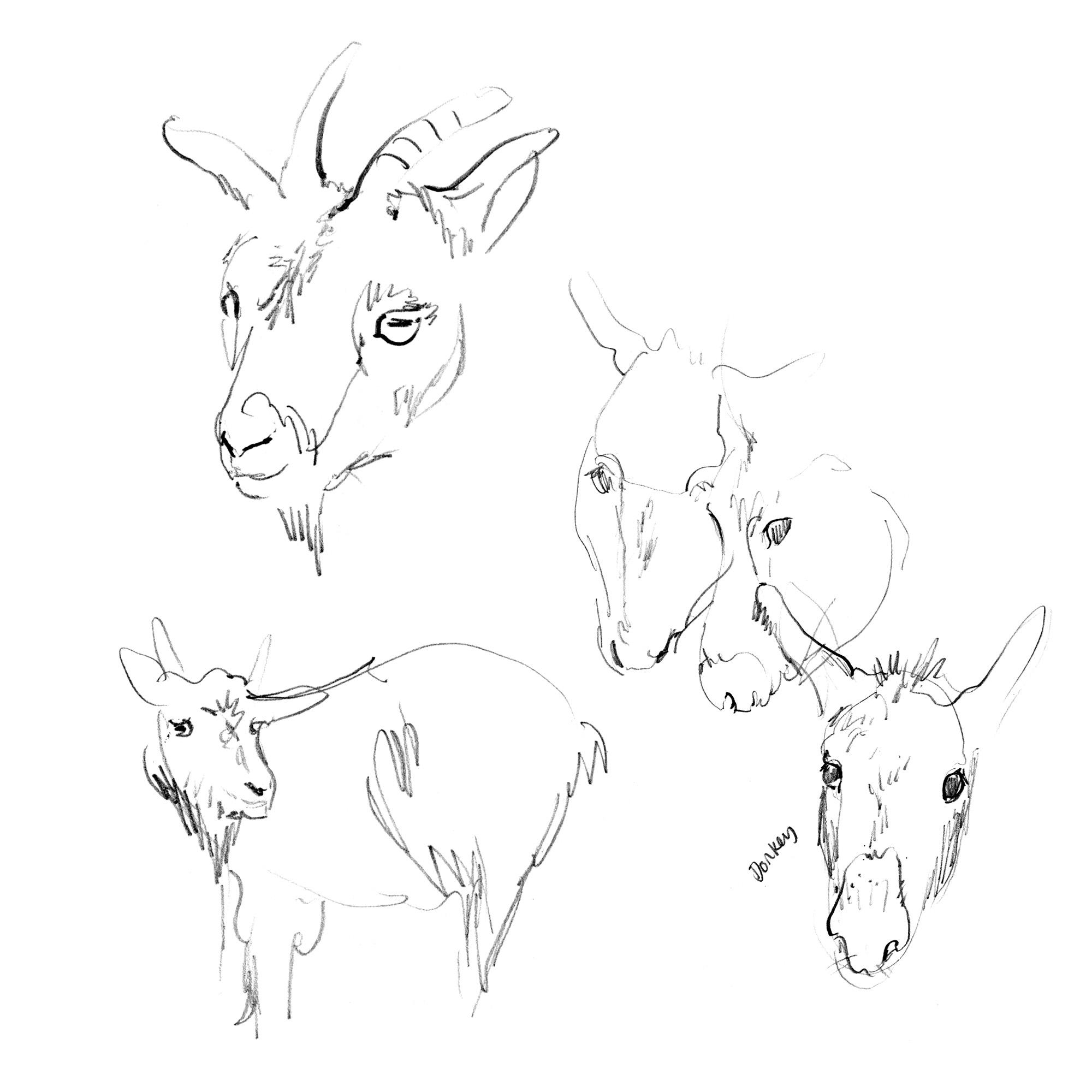 Goat&Donkey-Sketchbook_Sophia O'Connor.jpg