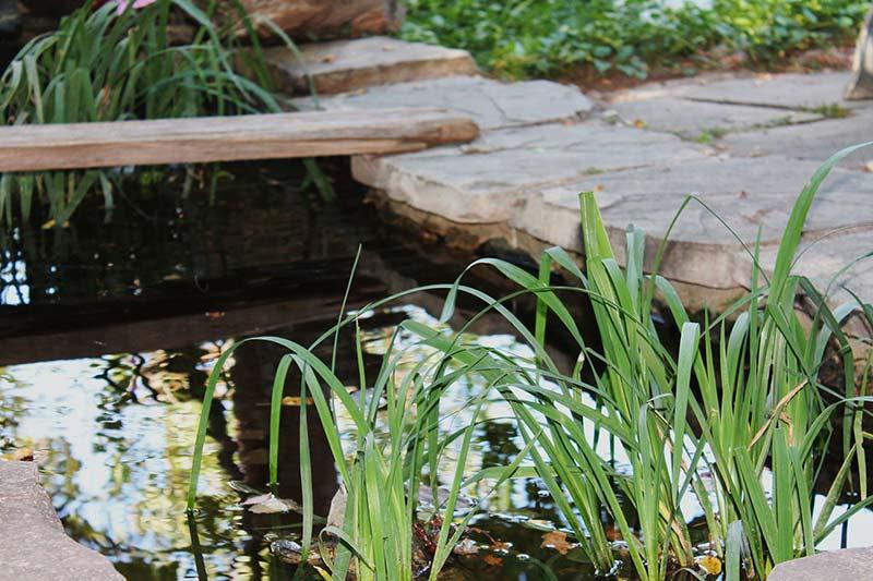 garden-pond-1045473_1280.jpg
