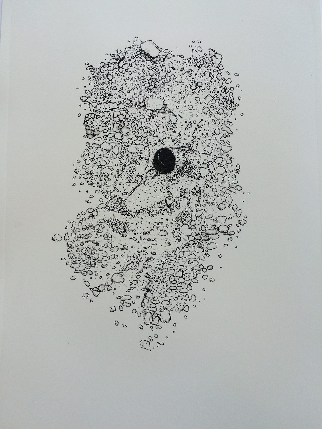 Morag Colquhoun and Lisa Wilkens, solitary bee, 2016, edition of 10 stone lithograph prints on Southbank paper, 28 x 38cm