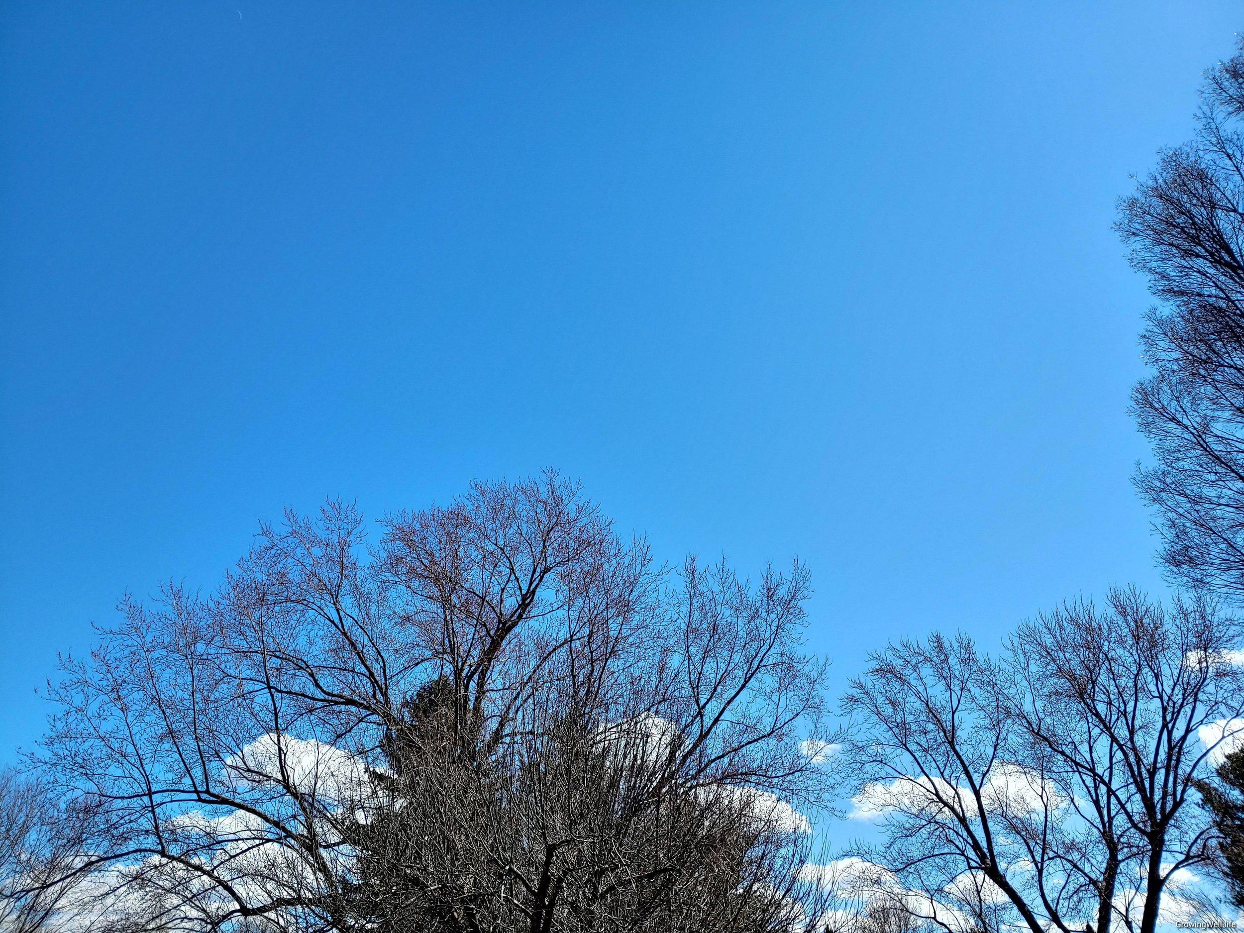 Early spring sky over Fiddlin' Goose Farm.
