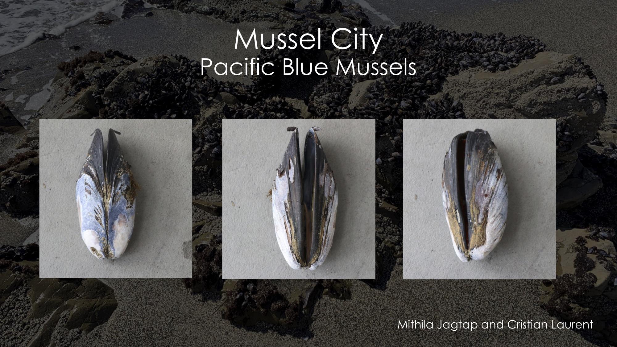 MusselCity 1.jpg