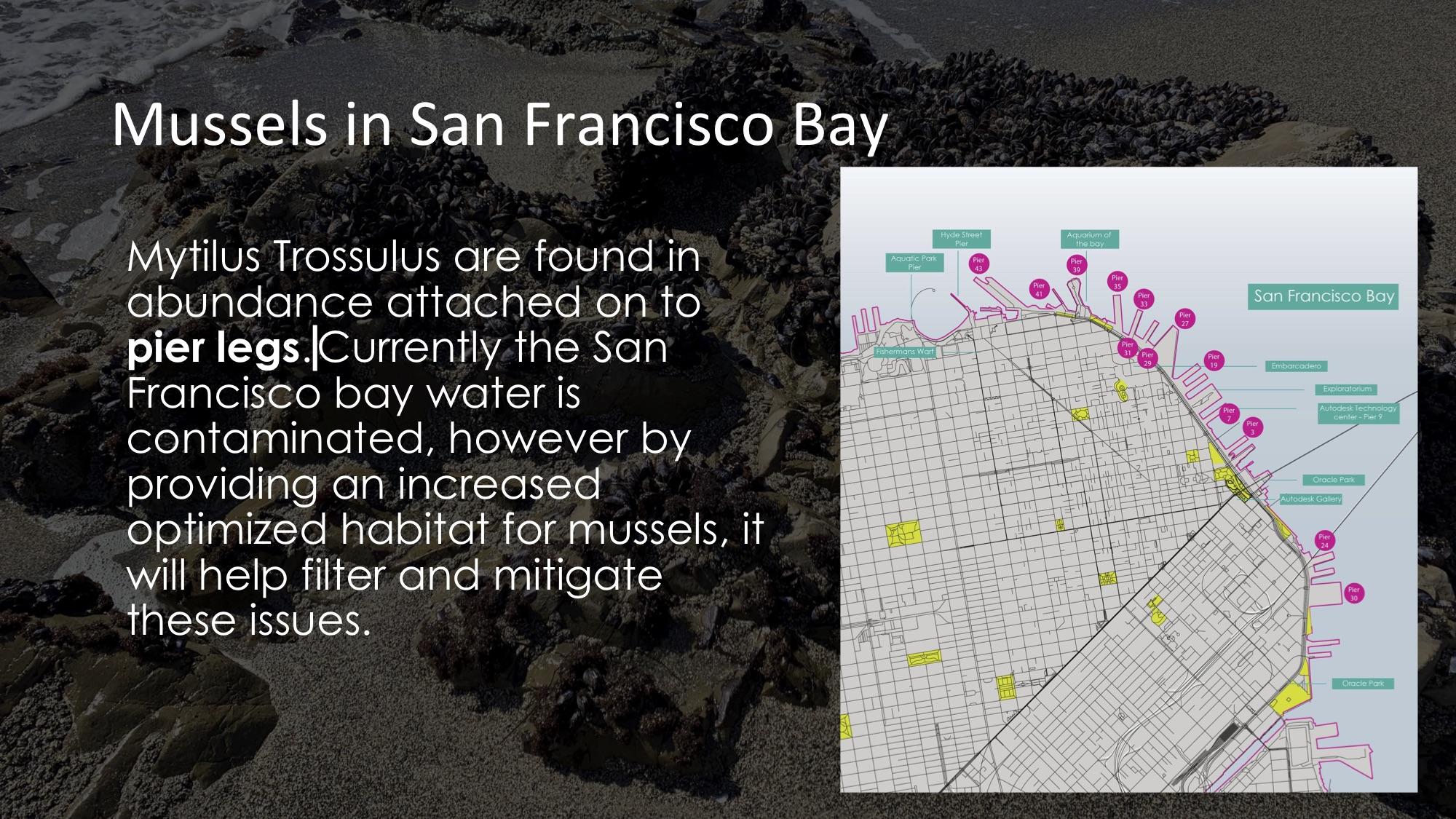 MusselCity 3.jpg
