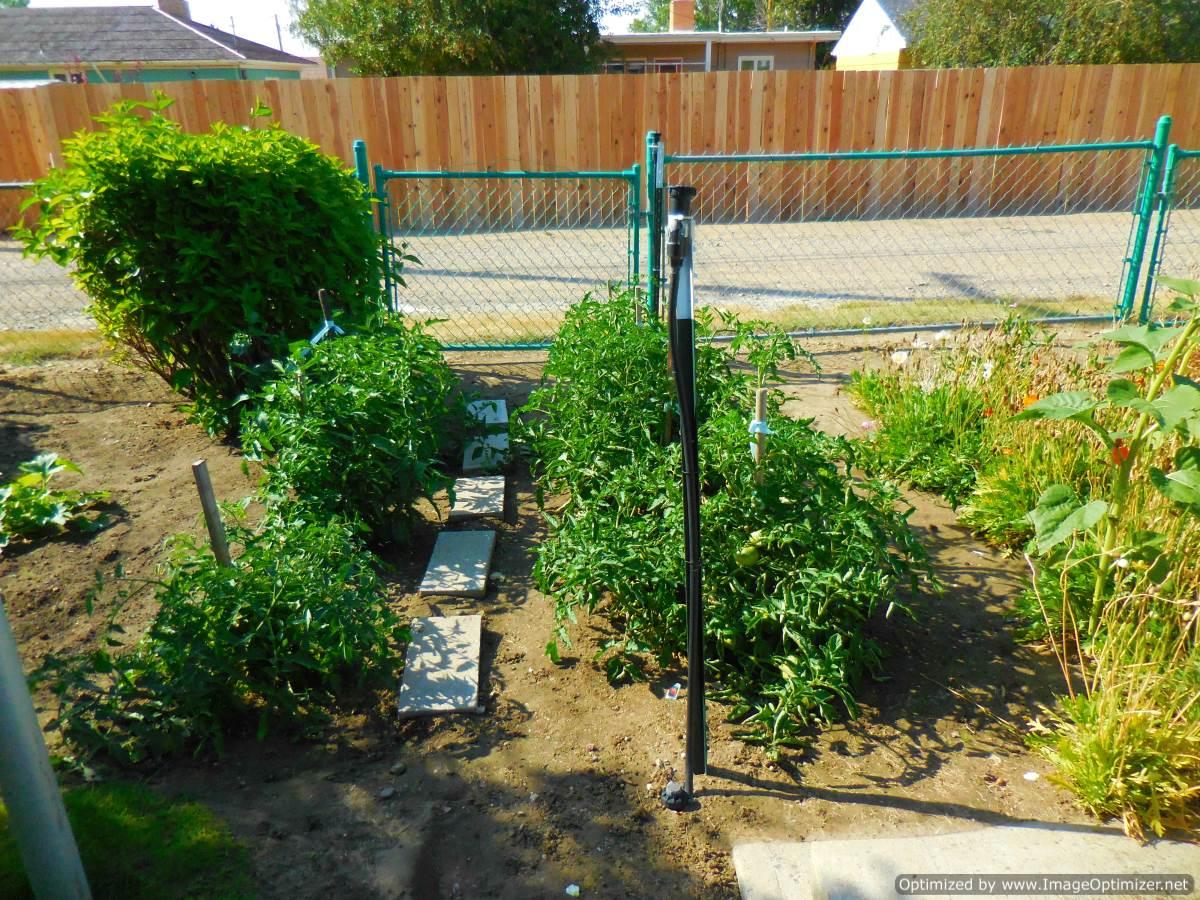 garden-Optimized.jpg