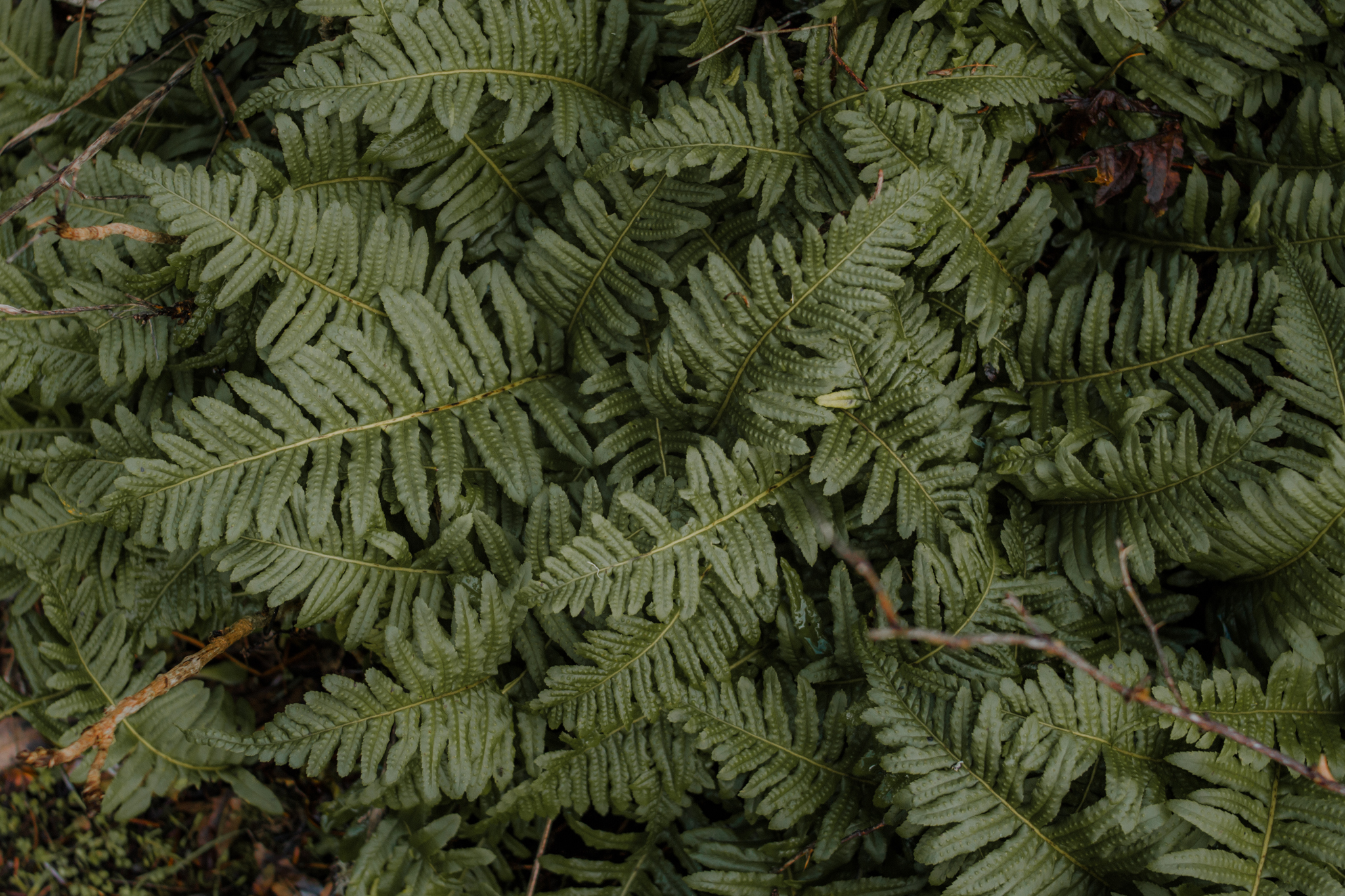 Fern - Inspired by the rich and varied greens of the forest floor, Fern adds depth in the green and brown tones.Works well for landscape and outdoor lifestyle.