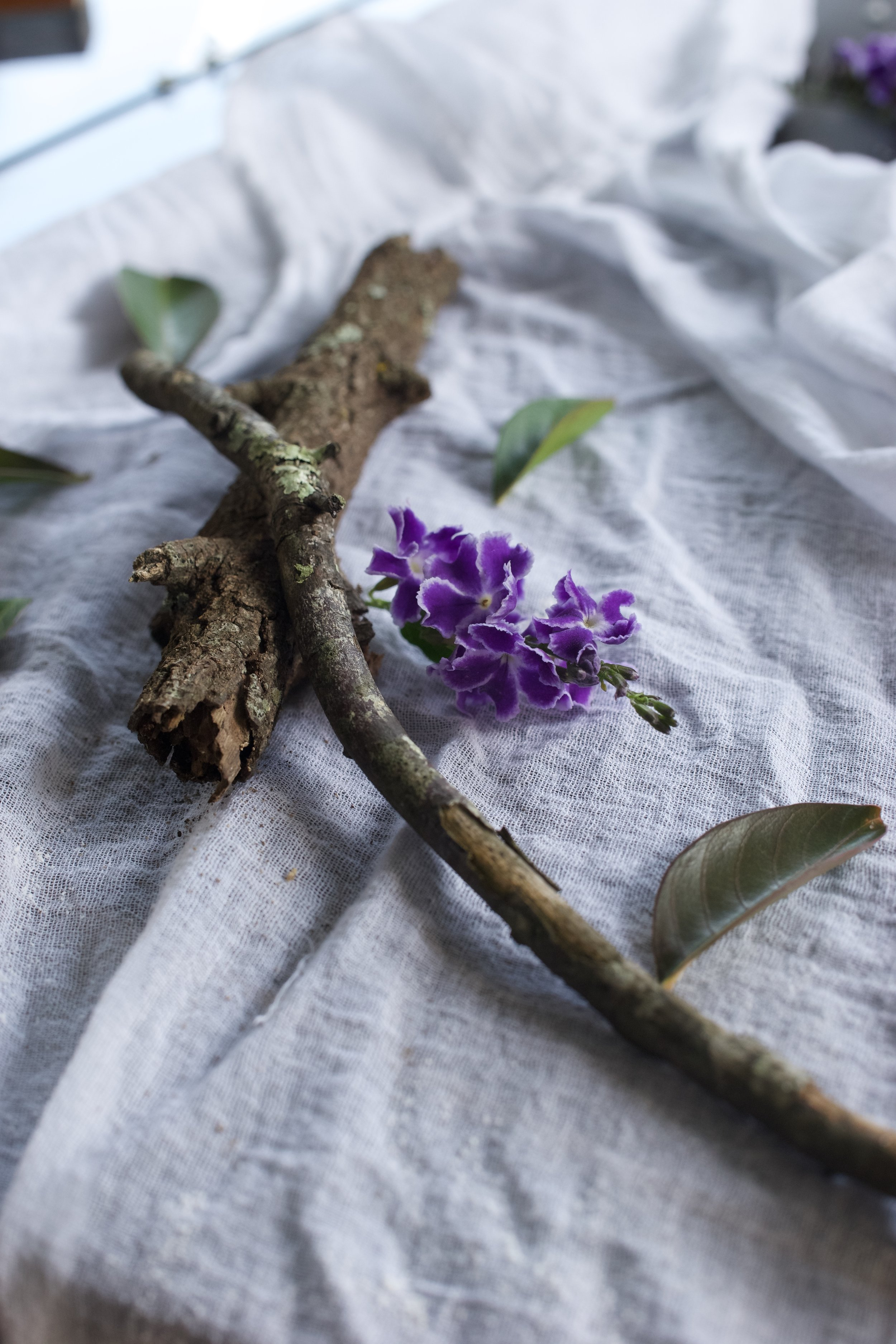 Twig and flower