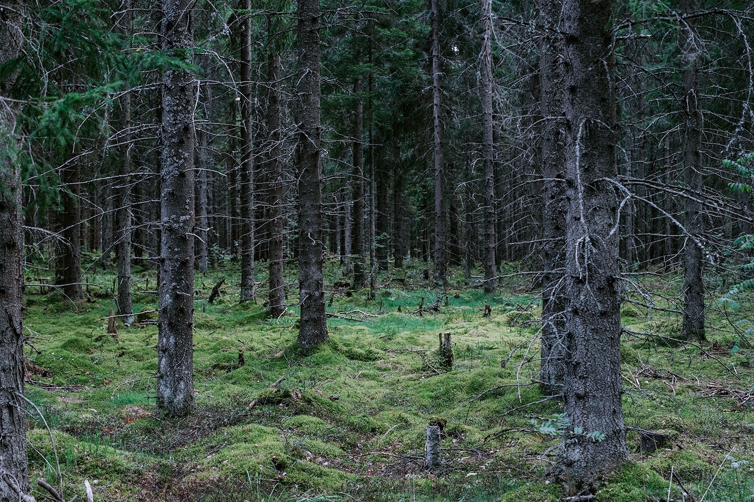 Forest and moss