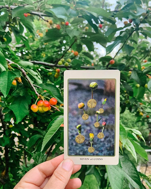 """🍒The Seven of Coins/Pentacles has been popping up allllllll over the place lately, in almost every reading I've done this last week! What message do they have for you? 🌱  PATIENCE 🌱  You may be so excited about what you've started, the dreams you're putting into motion, the seeds you've planted. But, sometimes your excitement causes premature harvest. This card teaches you to wait it out, not rush the process and trust in the timing of slow ripening. This image is from the #spoliatarot and @jessacrispin puts it bluntly and perfectly in the description she wrote for this card: """"If the pears aren't ripe yet, then don't eat the fucking pears. If you eat unripe fruit you will puke."""" 😂🙌🏼 The cherries on my tree just started to show color this week and you better believe I'm excited. But I also know to wait; the first year I lived here I picked a bunch of cherries right around this phase convincing myself they were Rainier cherries and totally ripe. They weren't. 🤦🏻♀️ I shed bitter tears (and my stomach aches, literally) as a result of harvesting too soon. 🌱  So, whatever you've got cooking; a new project, an idea that's starting to form, a healing or learning process, SLOW. YOUR. ROLL. Soak up the sun and LET IT RIPEN. Wait until whatever you've planted is blood red and juicy, ready to be plucked and enjoyed with maximum pleasure (and yes, waiting patiently will make it eeeeeeven sweeter) 🍒🍒🍒"""