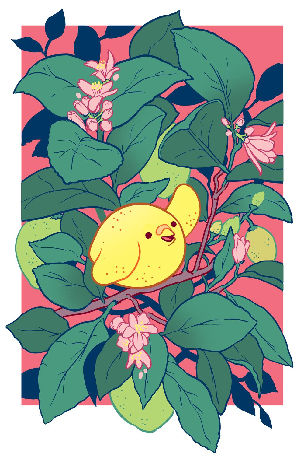 lemon_bird_cover3v2_nologo.jpg