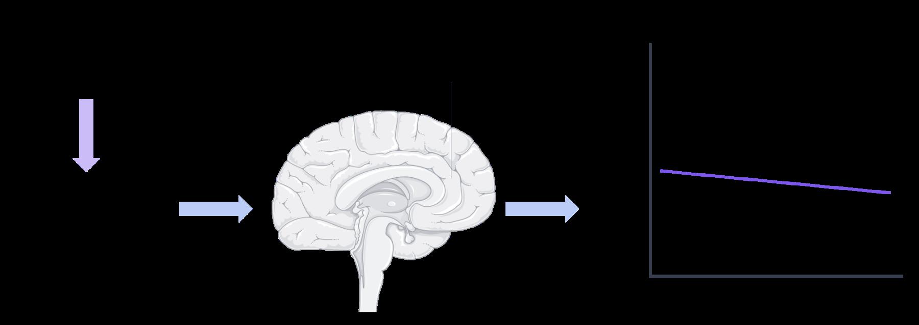 Brain, S  ervier Medical Art, image by BrainPost, CC BY-SA 3.0