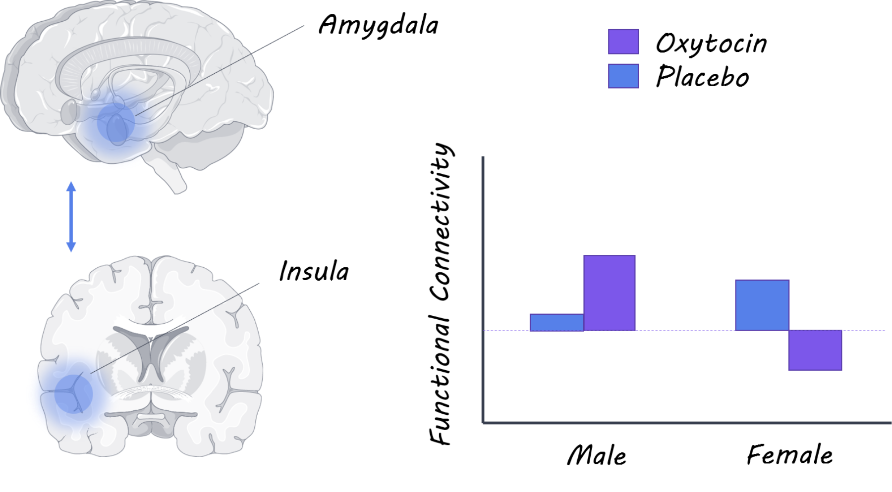 oxytocin1800.png