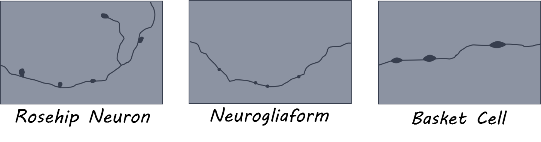 rosehip1800 (1).png