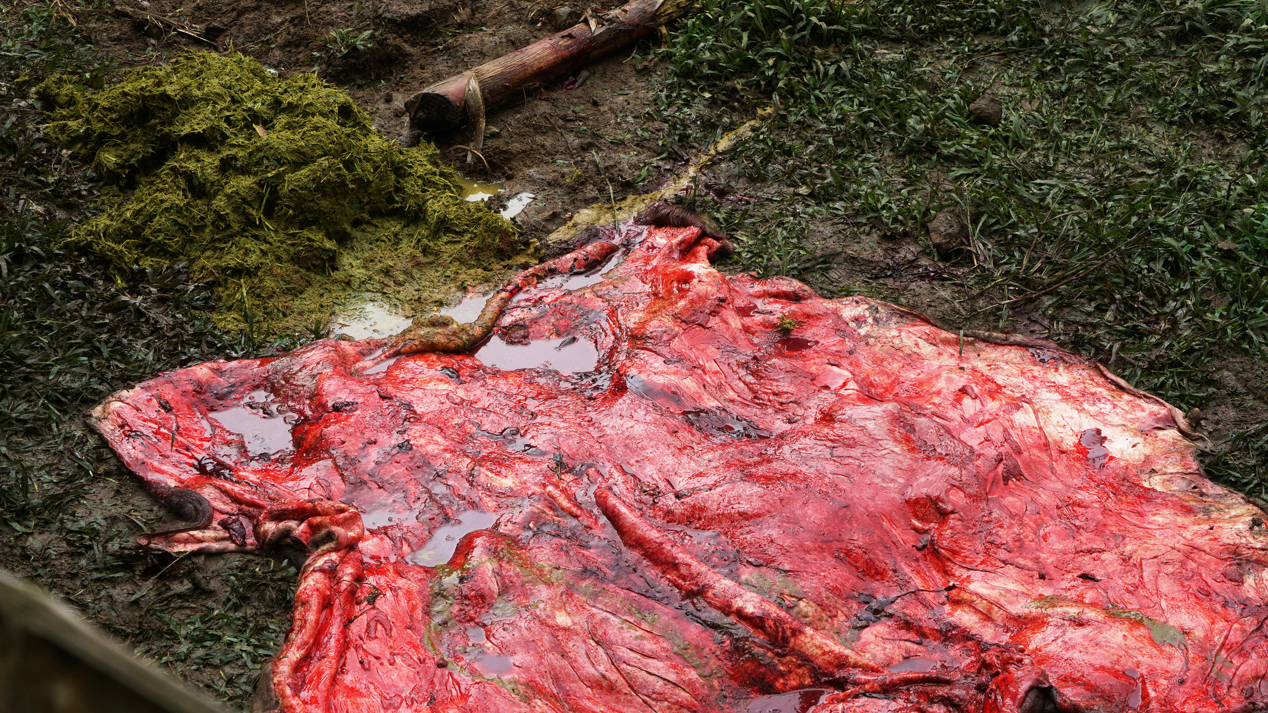 cow blood red_resized.jpg